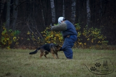 bkcf.ru-3456