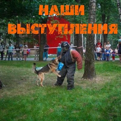 Выступления на соревнованиях по собаководству
